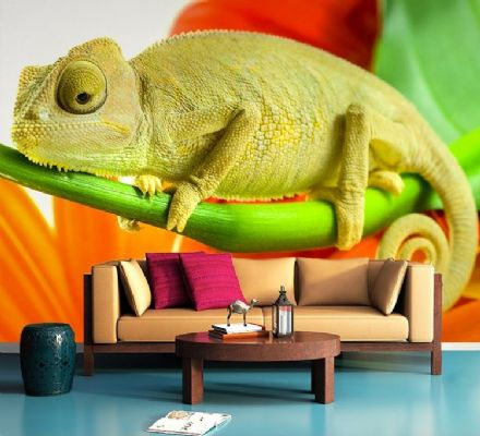 Chameleon green & orange wall murals